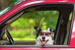 9 carros e cães que têm algo em comum