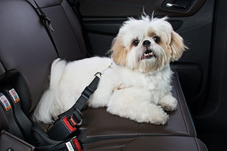 Como transportar cachorro no carro