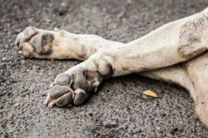 PL propõe pena para motorista que atropelar cães e gatos