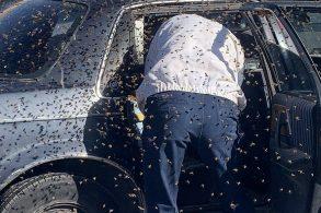Carro 'doce'? Enxame de 15 mil abelhas 'toma' veículo em supermercado