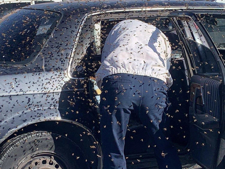 carro buick cheio abelhas proprietario