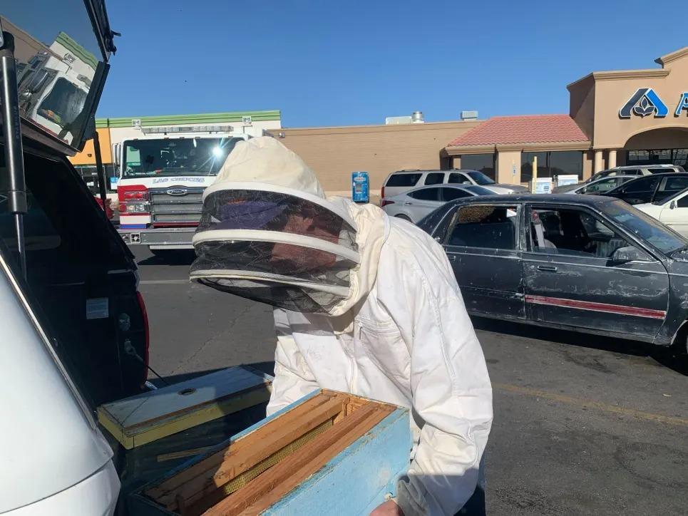 bombeiro retirou abelhas carro buick