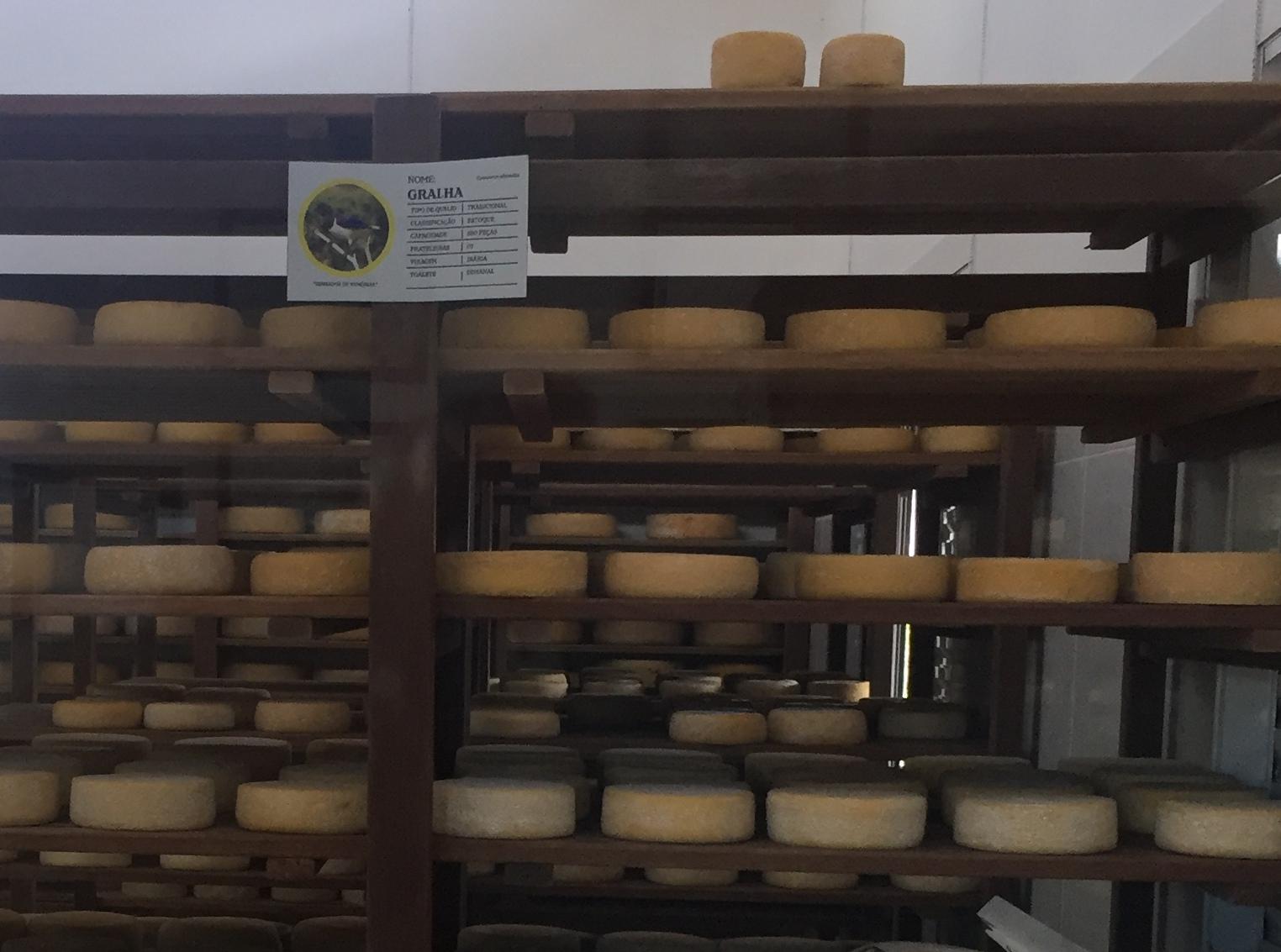 yamaha mt 07 canastra 9 armazenamento e maturacao dos queijos