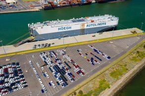 Praga de percevejos malcheirosos atrasa importação de veículos